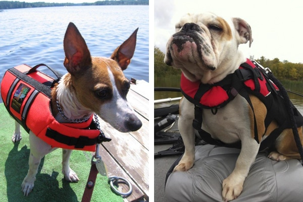 Image of two dogs wearing life jackets.