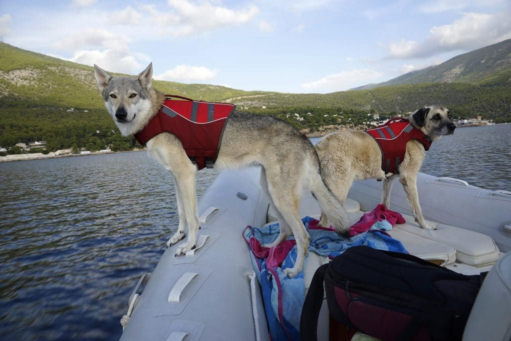 boatsmart boating with dogs safety tips